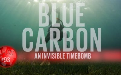 Blue Carbon. An invisible time bomb