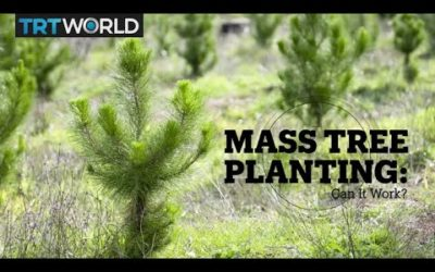 Mass Tree Planting: Can It Work?