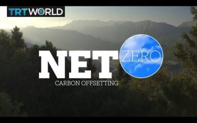NET ZERO: Carbon Offsetting