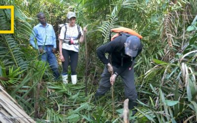 Peatlands Critical In Climate Change Fight