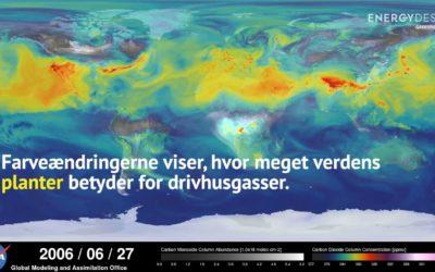 Så meget betyder verdens skove for drivhusgasser