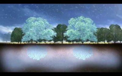 Skove og klimaændringer: En bekvem sandhed